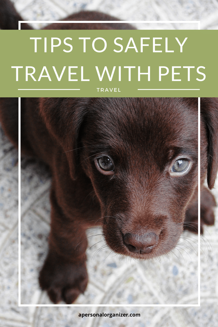 What to do when you need to travel and have a pet? Check these tips to enjoy your trip and make sure Fiddo is safe and happy!