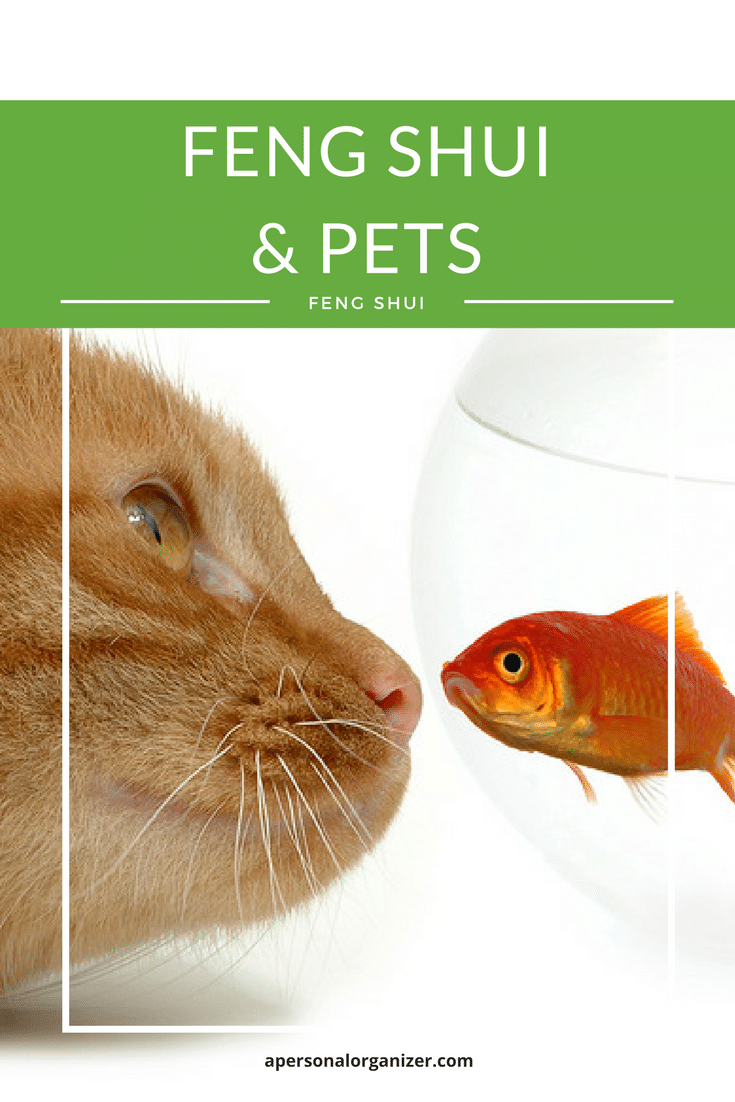Animals are most excellent Feng Shui! They generate and circulate moving life-force; invigorate our homes with joy; reduce depression and illness; and perhaps most importantly, open our hearts wide with unconditional love. Keep reading to learn more!